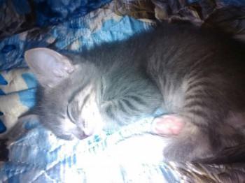 отдам даром котенка - _ymmHMVN-s4.jpg