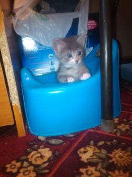 отдам даром котенка - 4xtLTnm_Ajk.jpg