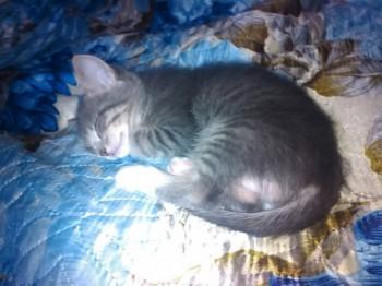 отдам даром котенка - zuYs5HkuZ20.jpg