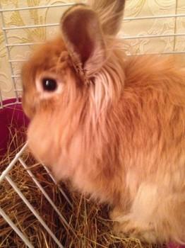 Декоративный кролик Отдам даром  - image.jpeg